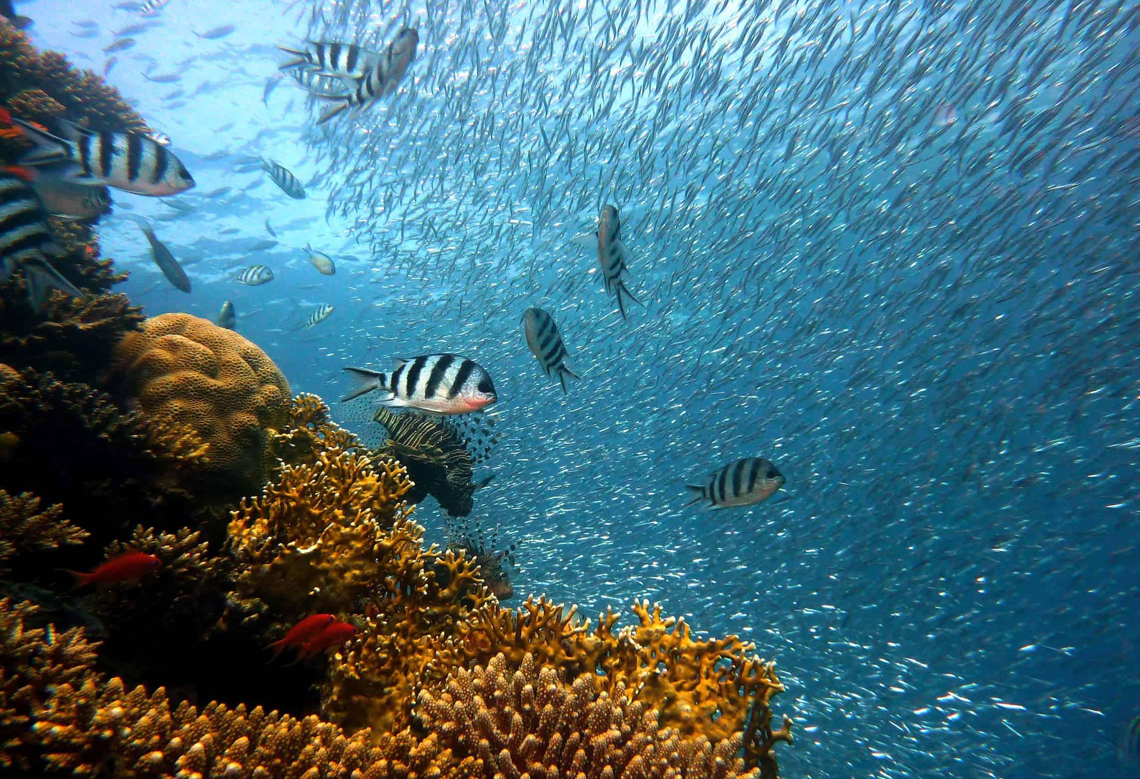 Meeresprojekt unterstützen Korallen Korallenriffe Ökosystem Meer