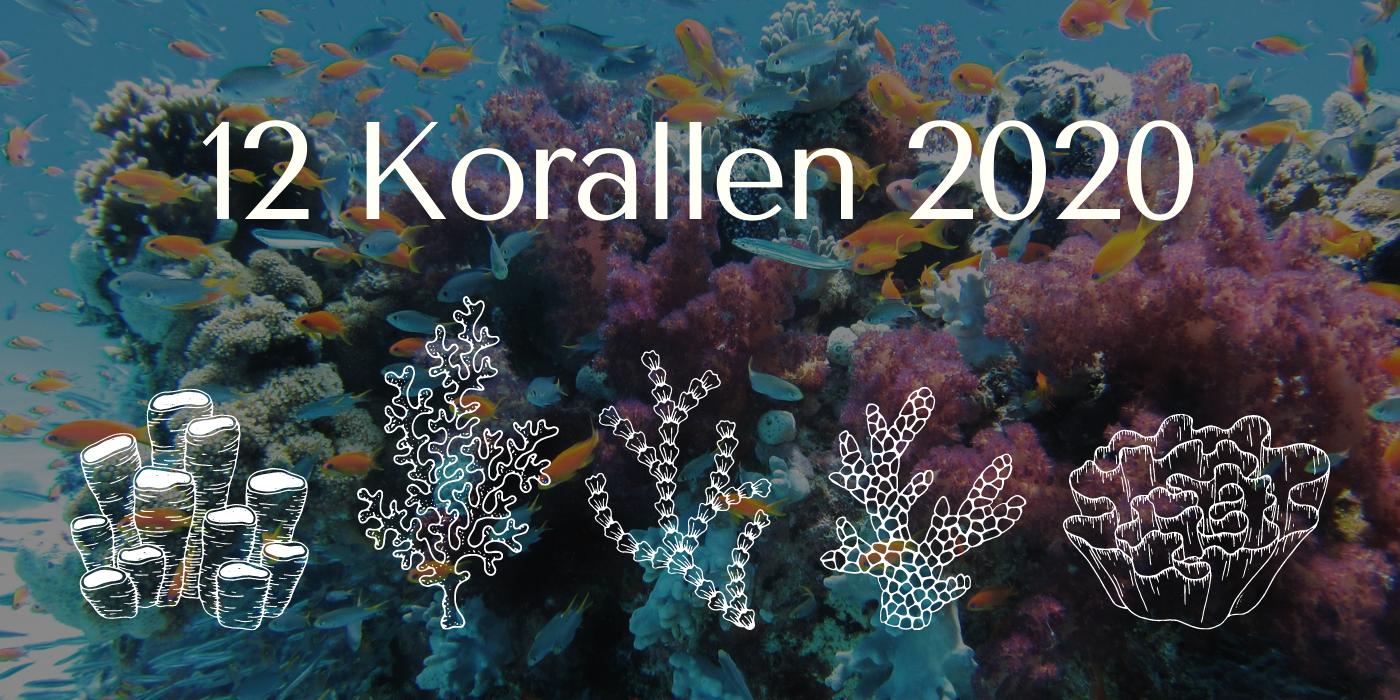 12 Korallen